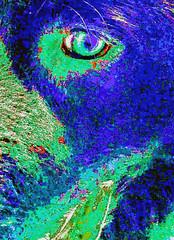 "SBK9U • <a style=""font-size:0.8em;"" href=""http://www.flickr.com/photos/95808399@N03/27601595688/"" target=""_blank"">View on Flickr</a>"