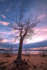 Lake Tahoe Tree (Middle aged Nikonite) Tags: lake tahoe landscape california nikon d750 tree sunset pink water shore sand nature outdoor irix 11mm clouds vista