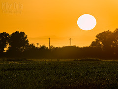 Corn's Eye View (mikeSF_) Tags: california brentwood knightsen oakley sun sunrise telephoto 645z pentax mikeoria mikeoriaphotography wwwmikeoriacom outdoor morning contracosta county rural 645 pentax645z a600 600mm compression field crop farm produce corn cornfield delta