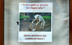 Frrance: Île Bouchard dog poster (Henk Binnendijk) Tags: france frankrijk loire indreetloire paysdelaloire dog hond chien hund dogshit hondenpoep poster affiche sign