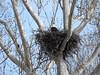 JLJ900_1617_edited-1 (Joni James) Tags: bald eagles nest morgan county indiana joni james incubation brooding