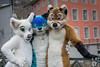 DSC_0113 (BerionHusky) Tags: fursuit mascot costume monschau furry fur