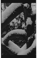 P59-2018-009 (lianefinch) Tags: argentique argentic analogique analog blackandwhite blackwhite bw noirblanc noiretblanc nb monochrome neige snow outdoor extérieur éléphant elephant rampe escalier