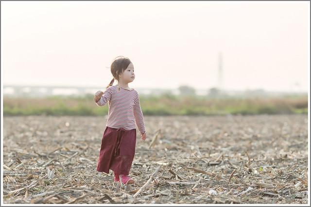 3月台南 親子寫真可以這樣拍 木棉花 蜀葵 小麥 一次讓你拍個夠 (62)