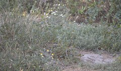 Frühlingsgrün sieht anders aus * Spring green looks different * El verde primavera se ve diferente *    .    _DSC8798 (maya.walti HK) Tags: 2018 copyrightbymayahk flickr frühling frühling2018 jahreszeiten macro makro murciaprovince nikond3200 primavera primavera2018 provinciademurcia provinzmurcia spring spring2018 130418
