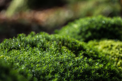 Rolling countryside :) (A Costigan (Off for a while)) Tags: green macro nature outdoor plant bokeh