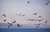 Sevinç çığlıkları (frknblr) Tags: landscape seagull gull sky white blue water nature eos canon martı hayvan animal manzara türkiye turkey konya beyşehirgölü beyşehir