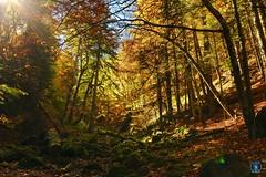 Foret du Vercors - Automne (Nik2o) Tags: 1020 sigma color couleur tree arbre feuille montage ciel landscape bouvante auvergnerhônealpes france fr d7500 nikon vercors automne nik2o