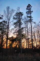 Trees At Sunset. (dccradio) Tags: lumberton nc northcarolina robesoncounty outdoors outside nikon d40 dslr tree trees nature natural woods wooded forest backyard landscape scenic beauty godshandiwork treebranch treebranches branch branches treelimbs sky colorful evening goodevening fridayevening goodfriday sunset sunsetsky clouds silhouette