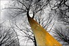 some color on a dreary day (daaynos) Tags: tree trees treetrunk sky bw colors nature dreary forest orange branch boom stam takken