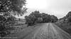 Country Road (lorinleecary) Tags: californiacentralcoast harmony landscape road trees blackandwhite