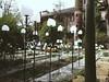 (jupitaria) Tags: milan milano garden giardinobotanico green plants trees flowers leaves brera