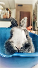 Bunny before being cooked (-REcallable-Memories-of-ET-) Tags: nyúl hase rabbit bunny vegan food dangerous cute playboy