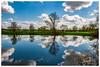 La tête dans les nuages (Pascale_seg) Tags: landscape paysage river riverscape moselle lorraine france nikon étang ciel sky cloud cloudy nuage nuageux reflet reflection lumière light bleu blue soleil sun arbre tree printemps spring groupenuagesetciel