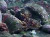 Sepia 3 (Der Felsberg) Tags: madeira sea riff atlantic meer sepia auge eye