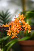 20180406-SFSunday-5054 (LucaFoto!) Tags: lucafoto best conservatoryofflowers ella flora goldengatepark humid luclucafotocom lucy photography sanfrancisco thegirls victorian fotography gardin greenhouse images orchids plants quality tropical