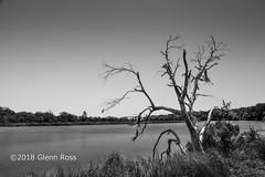Deadwood on the Ashley River_1105-2.jpg
