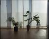 '18.04.06-08r (dipositif) Tags: mamiya7 film kodak portra mediumformat