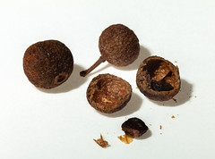 Juniper (Antti Tassberg) Tags: spice juniper seed macro macromondays condiment 100mm lens prime