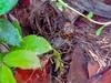 IMG_1573.jpg (xposed59405) Tags: leaves f40 120sec rainydays 11783mm treetrunk palmtree iso800 snail