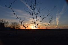 Sunset 8 (darletts56) Tags: sky blue cloud clouds sunset tree trees contrails silhouette prairie landscape evening sundown last light