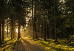forest series #20 revisited (Stefan A. Schmidt) Tags: meschede nordrheinwestfalen deutschland de waldweg trail sentier pentaxart