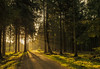 forest series #20 revisited (Stefan A. Schmidt) Tags: meschede nordrheinwestfalen deutschland de waldweg trail sentier