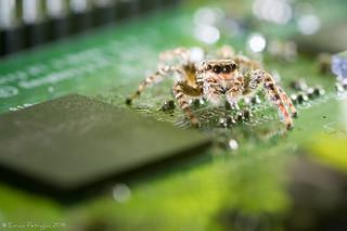 Spider inside!
