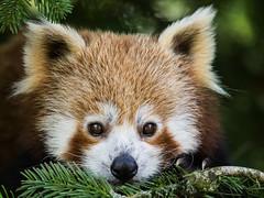 P6191651 (zullo_stefano) Tags: wildnature wild nature colors colorsofnature animal animals zoo zoosafarinaturaviva pastrengo zuiko olympus olympuse5 italy