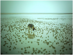Normandie 2018 (KKS_51) Tags: neingrenze5000t bassenormandie strand beach mer meer sea dogs hunde littledoglaughednoiret