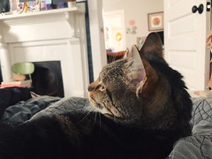 91/365 (moke076) Tags: 2018 365 project 365project project365 oneaday photoaday iphone cell cellphone mobile cat animal pet tabby grey gray tommy bed bedroom art mantle house side profile