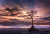 Lone tree (Zoltan Schadel photography) Tags: lochlomond spring sunset people mountains lake zoltanschadel rocks loch locations scotland tree uk clouds reflection snow stones landscapes