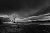 Survivor (johnkaysleftleg) Tags: derwentreservoir consett countydurham northpennines aonb monochrome mono blackwhile drama dramaticskies tree lonetree canon760d sigma1020mmf456exdchsm ndhardgrad06