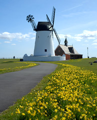 Easter at Lytham (Tony Worrall) Tags: resort place england english north northwest visit county town area northern location lancs lancashire uk fylde fyldecoast coastal tour country welovethenorth city regional region update attraction open stream nw britain british gb capture buy stock sell sale outside outdoors caught photo shoot shot picture captured windmill relic lytham historic icon scene windy mill white building yellow flowers path daffodils
