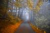 herbstlicher Nebelweg (NPPhotographie) Tags: nature art creative oberberg npp tree wood forest way street fog mist magic magical dust