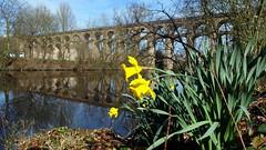 Bietigheimer Enzviadukt (greenoid) Tags: bietigheim enz viadukt enzviadukt ostern narzissen flus brücke eisenbahnbrücke