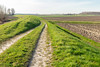 Cart track along a Dutch dike - Karrespoor langs een dijk (RuudMorijn-NL) Tags: agricultural agriculture blue brown cart colorful country countryside curved dike ditch dutch earth embankment europe farm farming farmland field grass green horizon idyllic landscape nature outdoor outside overview path perspective ploughed plowed polder road rural scenic seasonal sky soil springtime sunny texture traces tracks trees way wheel wide yellow binnendijk westbrabant noordbrabant nieuwvossemeer natuur natuurgebied karrespoor landweg weids agrarisch agricultuur geploegd land landschap akker lente voorjaar zonnig gemeentesteenbergen dijk groen gras perspectief