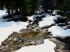 Chi ha spento il freezer ? 😲 (carlo612001) Tags: snow water springtime spring sun neve primavera acqua montagna river ruscello