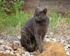 King Smokey (lennycarl08) Tags: smokey cat lc