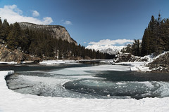 Bow River (petemenzies.com) Tags: current spiral thawing frozen winter banff alberta travel canada ice snow pines nature scenery bowriver river edge nikon d850 2470mm 24mm 6 cool uncool uncool2 uncool3 uncool4 cool2 uncool5 uncool6 uncool7 uncool8 c2u7