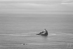 Terrible Tilly (Joshua Johnston Photography) Tags: oregon pacificnorthwest pnw joshuajohnston sonya7ii oregoncoast pacificocean landscapephotography sonyfe70300mmf4556goss lighthouse tillamookrocklighthouse blackandwhite bnw