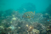 20180422-DSC_0137.jpg (d3_plus) Tags: landscape d700 nature fish marinesports apnea zoomlense 185mm izu sea port j4 skindiving 自然 nikon1 景色 風景 魚 ニコン1 watersports wpn3 drive daily マリンスポーツ japan fishingport ニコン 50mmf18 50mm dailyphoto nikonwpn3 nikon 素潜り ウォータープルーフケース 水中 nikkor sky スキンダイビング nikon1j4 漁港 underwater 海 snorkeling nikond700 地形 scenery 息こらえ潜水 ズーム 1nikkor185mmf18 eastizu 185mmf18 空 日本 東伊豆 waterproofcase シュノーケリング diving