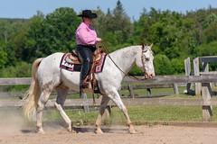 JBC_5948.jpg (Jim Babbage) Tags: krahc bethany appaloosa horses horseshow 2018