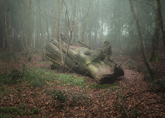 Little Bradley Woods, Somerset (michaelbeecham) Tags: woodland landscape nature trees forest woods logs light mist atmosphere shadow emotion gesture dark fujix100f fujifilm x100f amateurphotography landscapephotography naturephotography woodlandphotography woodlandtrust ordinancesurvey forestrycommission