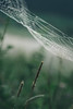 Keep calm (--StadtKind--) Tags: stadtkind moodynatureelite moodynature naturephotography nature sonyfe90mmf28macrogoss sonyilce7rm3 alphaddicted sonyalpha depthoffield dof spiderweb spider bokehmasters bokehaddicts bokeh