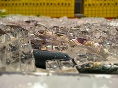 frischer Fisch (MadCyborg) Tags: fuji fujifilm xt20 fisch fish taipeh taipeicity taiwan tw vonfischersfritzegefischt