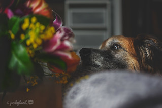 24/52 - smell the flowers �