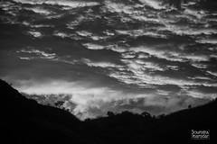 Standing alone (soumitra911) Tags: tree sky clouds black white monsoon india pune maharashtra evening sunset cloudscape landscape trees mountain hill peak dark sahyadri