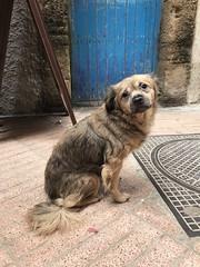 (♫~♥~Doris~♥~♫) Tags: essaouira cute dog cutestdog cutedog doggie morocco