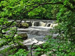 Aysgarth Falls (sarahhelen.heptinstall@ymail.com) Tags: water trees aysgarth